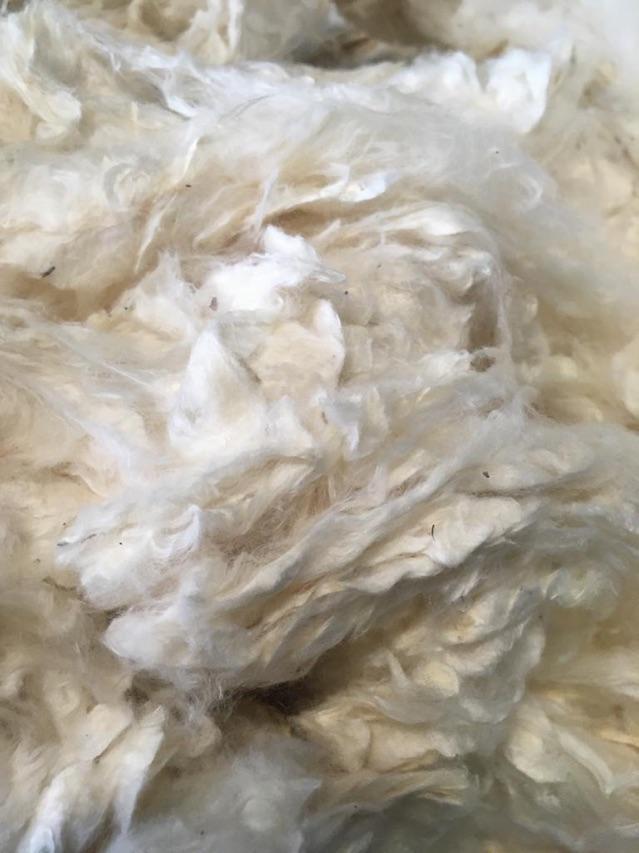Cotone sodo